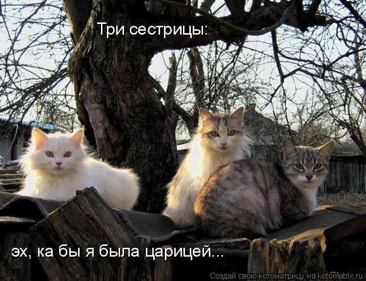 Котоматрица: эх, ка бы я была царицей... Три сестрицы: