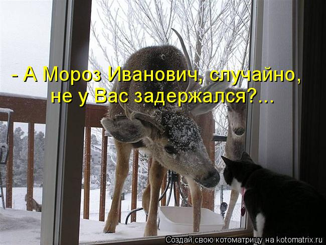 Котоматрица: - А Мороз Иванович, случайно,  не у Вас задержался?...