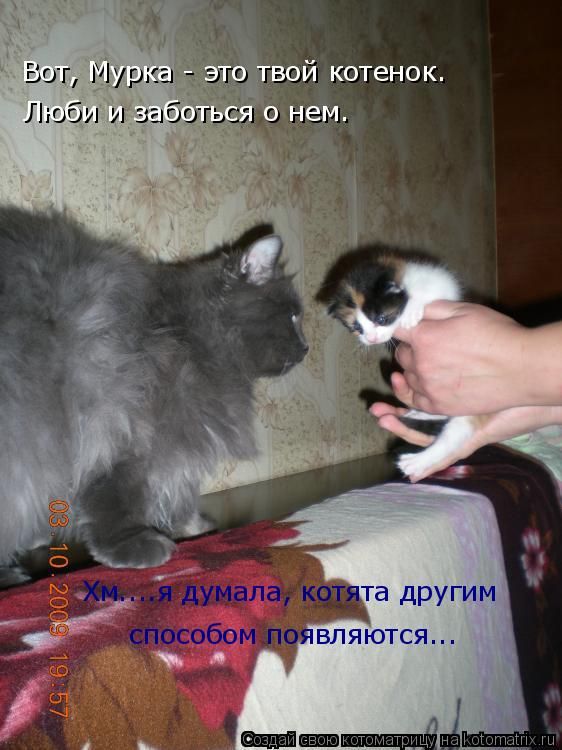 Котоматрица: Вот, Мурка - это твой котенок. Люби и заботься о нем. Хм....я думала, котята другим  способом появляются...