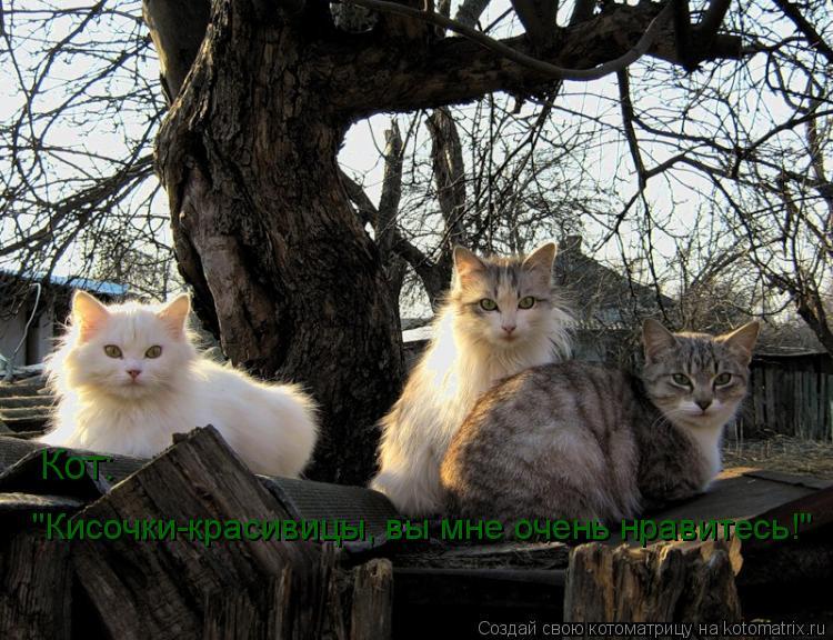 """Котоматрица: Кот: """"Кисочки-красивицы, вы мне очень нравитесь!"""""""