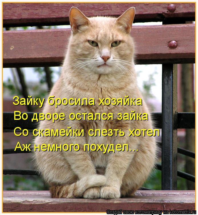 Котоматрица: Зайку бросила хозяйка Во дворе остался зайка Со скамейки слезть хотел Аж немного похудел...