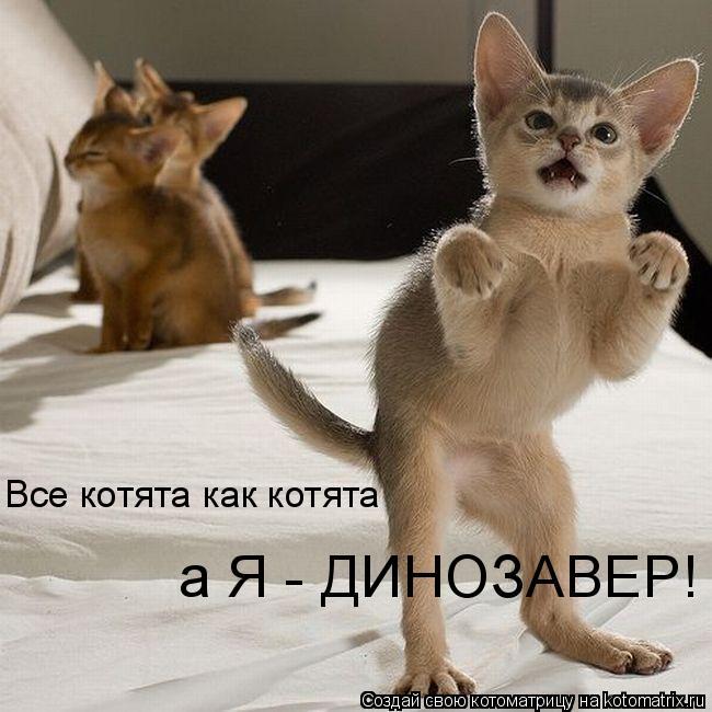 Котоматрица: Все котята как котята а Я - ДИНОЗАВЕР!