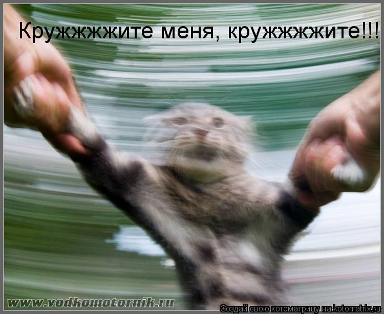 Котоматрица: Кружжжжите меня, кружжжжите!!!