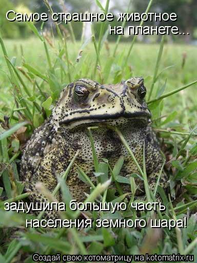 Котоматрица: Самое страшное животное на планете... задушила большую часть населения земного шара!