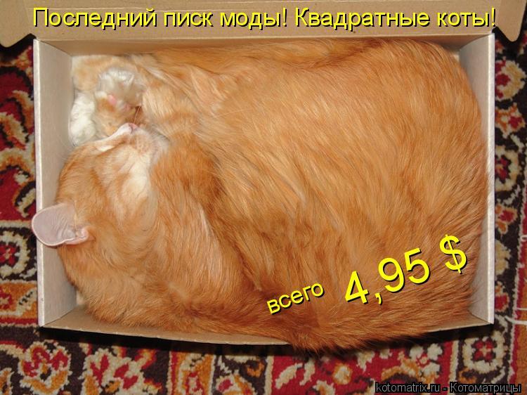 Котоматрица: 4,95 $ Последний писк моды! Квадратные коты! всего