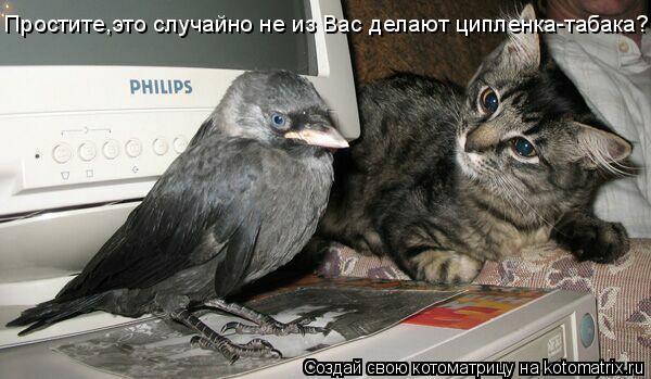 смешные фото про кошек с надписями.
