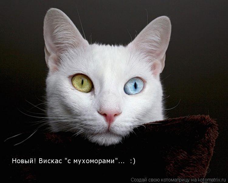 "Котоматрица: Новый! Вискас ""с мухоморами""...  :)"