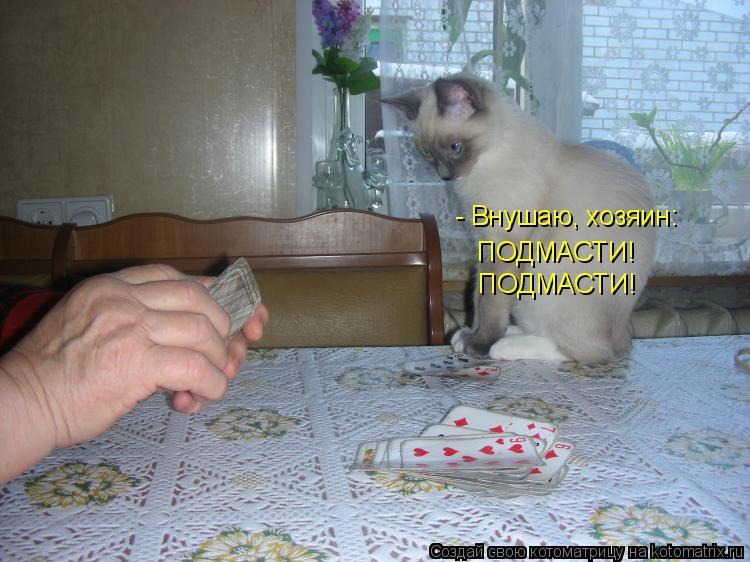 Котоматрица: - Внушаю, хозяин: ПОДМАСТИ! ПОДМАСТИ!
