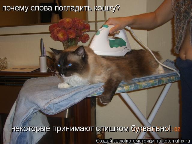 Котоматрица: почему слова погладить кошку? некоторые принимают слишком буквально!