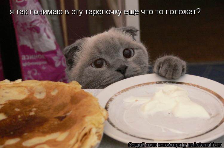 Котоматрица: я так понимаю в эту тарелочку еще что то положат?