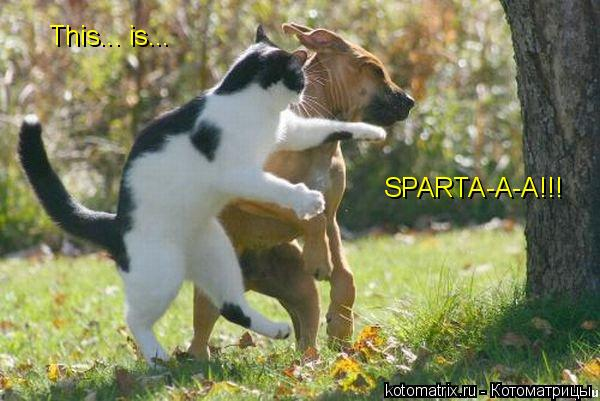 Котоматрица: This... is... SPARTA-A-A!!!