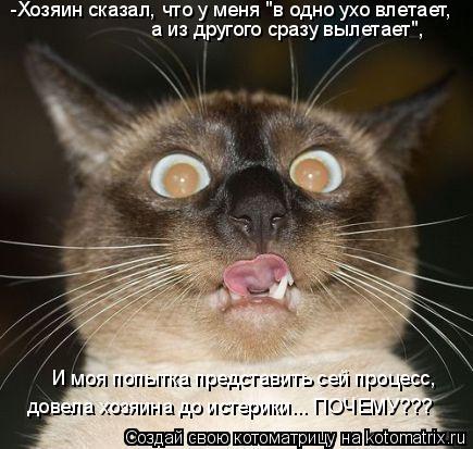 """Котоматрица: -Хозяин сказал, что у меня """"в одно ухо влетает,  а из другого сразу вылетает"""", И моя попытка представить сей процесс, довела хозяина до истерик"""