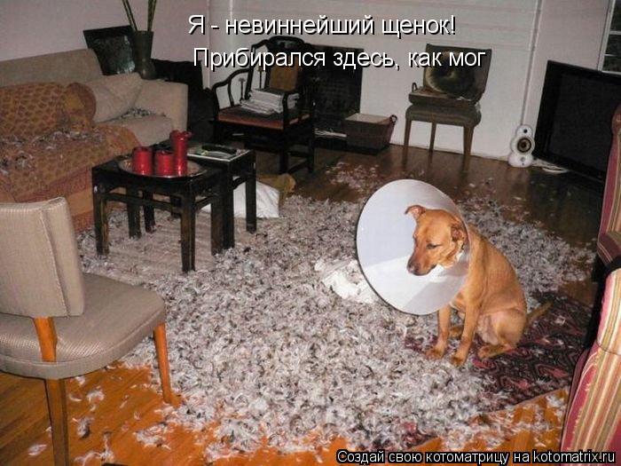 Котоматрица: Я - невиннейший щенок! Прибирался здесь, как мог