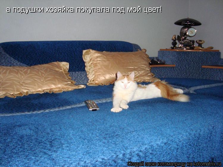 Котоматрица: а подушки хозяйка покупала под мой цвет!