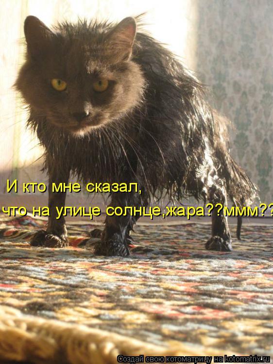 Котоматрица: И кто мне сказал,что на улице солнце?жара?!! М??? И кто мне сказал, что на улице солнце,жара??ммм??