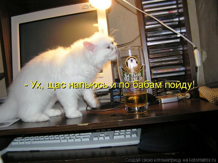Котоматрица: - Ух, щас напьюсь и по бабам пойду!