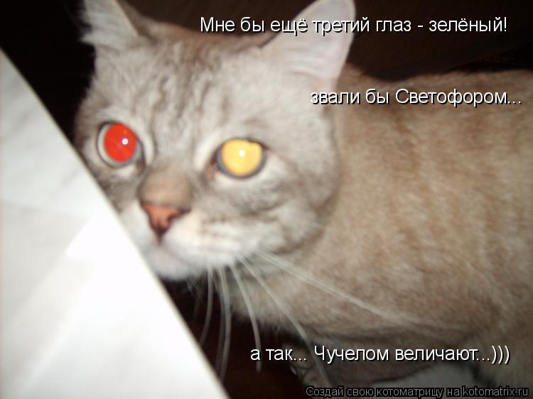 Котоматрица: звали бы Светофором... а так... Чучелом величают...))) Мне бы ещё третий глаз - зелёный!