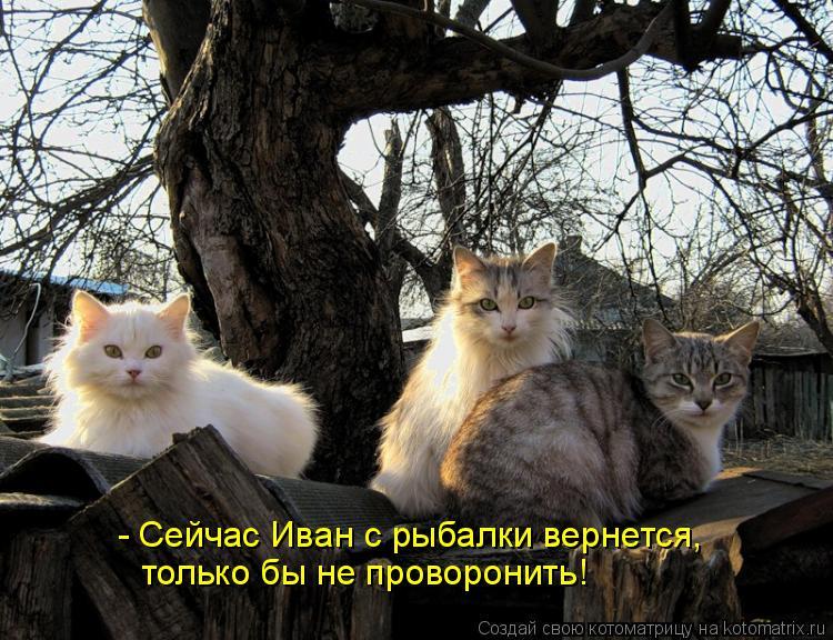 Котоматрица: - Сейчас Иван с рыбалки вернется, только бы не проворонить!