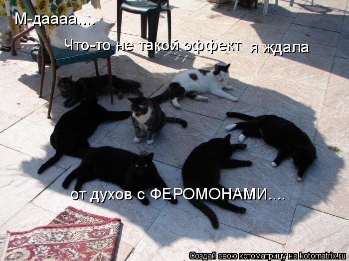 Котоматрица: М-даааа.... Что-то не такой эффект я ждала от духов с ФЕРОМОНАМИ....