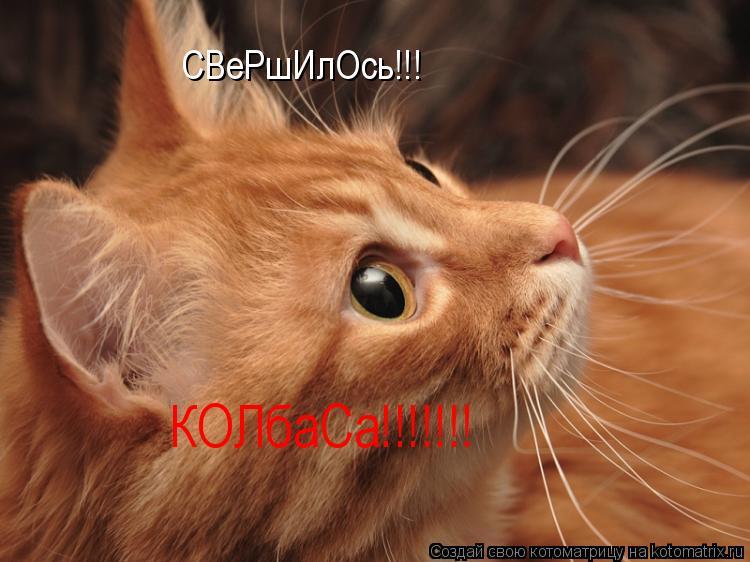 Котоматрица: СВеРшИлОсь!!! КОЛбаСа!!!!!!!
