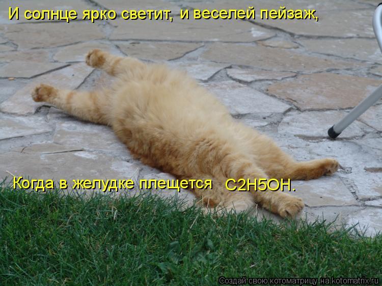 Котоматрица: И солнце ярко светит, и веселей пейзаж, Когда в желудке плещется   C2H5OH.