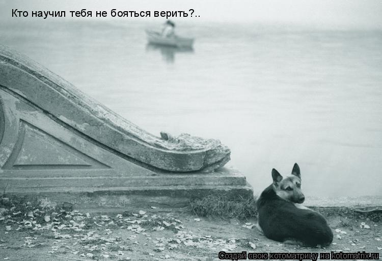 Котоматрица: Кто научил тебя не бояться верить?..