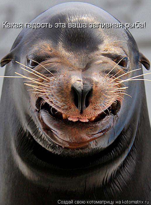 Котоматрица: Какая гадость эта ваша заливная рыба!