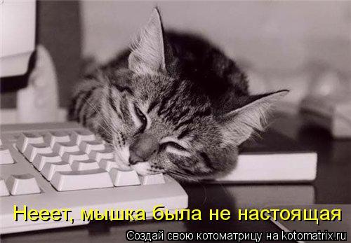 Котоматрица: Нееет, мышка была не настоящая