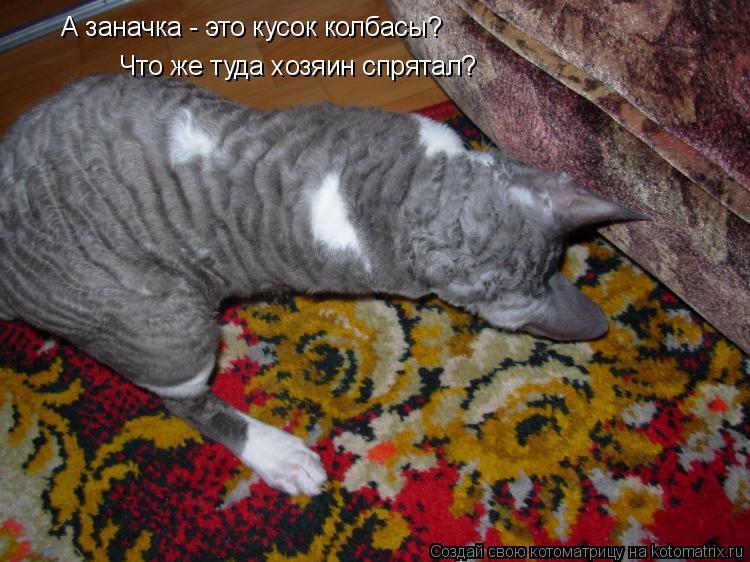 Котоматрица: Что же туда хозяин спрятал? А заначка - это кусок колбасы?