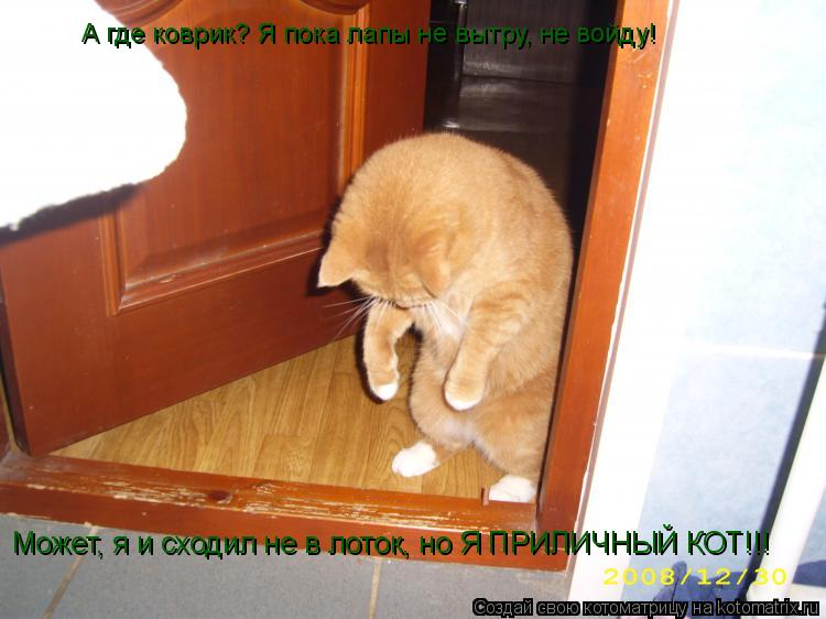 Котоматрица: А где коврик? Я пока лапы не вытру, не войду! Может, я и сходил не в лоток, но Я ПРИЛИЧНЫЙ КОТ!!!