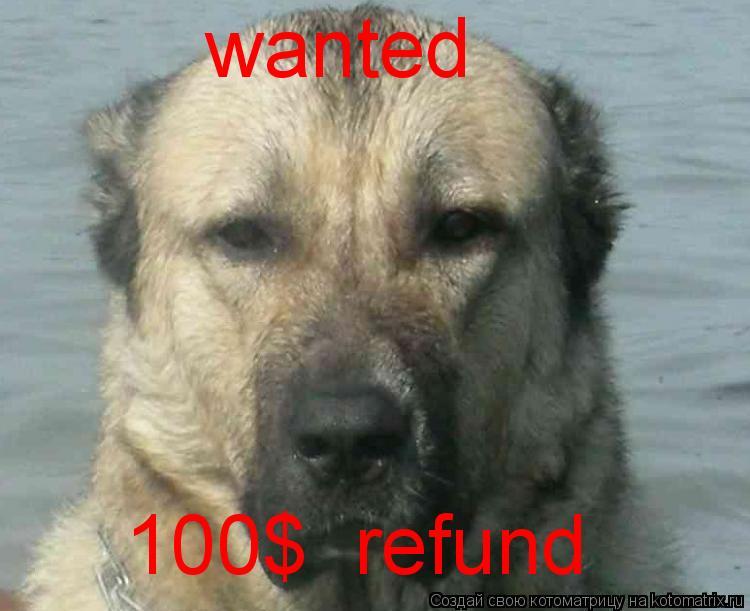 Котоматрица: wanted 100$  refund