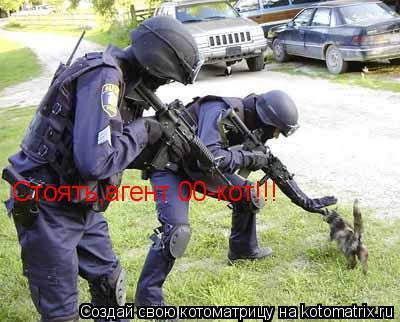 Котоматрица: Стоять,агент 00-кот!!!