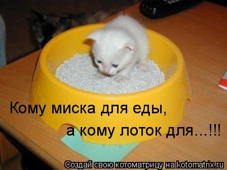 Котоматрица: Кому миска для еды,  а кому лоток для...!!!