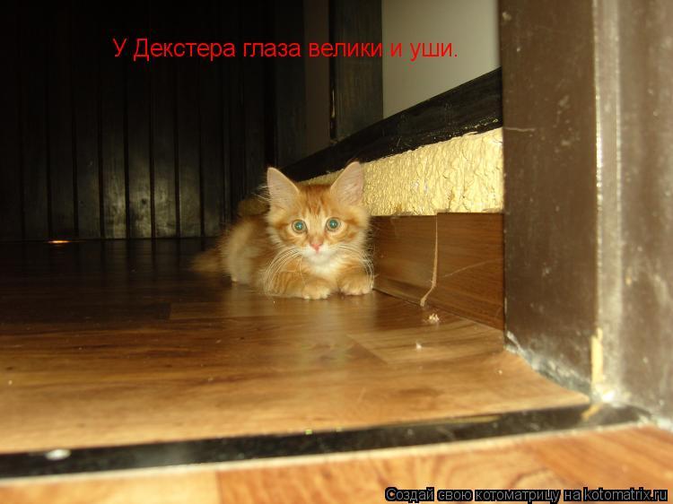 Котоматрица: У Декстера глаза велики. У Декстера глаза велики. У Декстера глаза велики и уши.