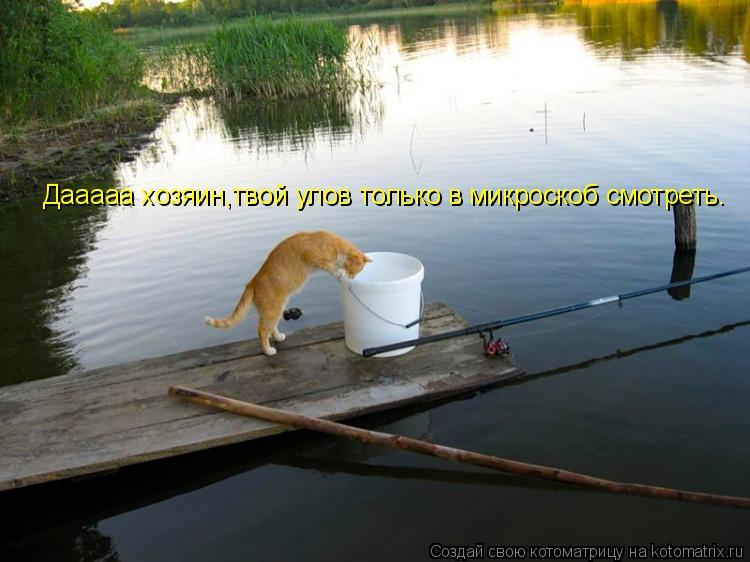 Котоматрица: Дааааа хозяин,твой улов только в микроскоб смотреть.