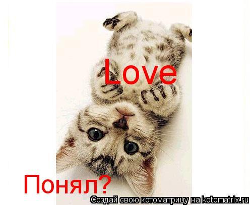 Котоматрица: Love Понял?