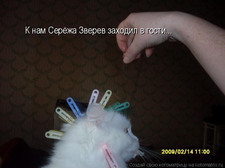 Котоматрица: К нам Серёжа Зверев заходил в гости...
