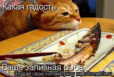 Котоматрица: Какая гадость Ваша заливная рыба...