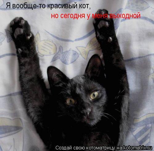 Котоматрица: Я вообще-то красивый кот, но сегодня у меня выходной