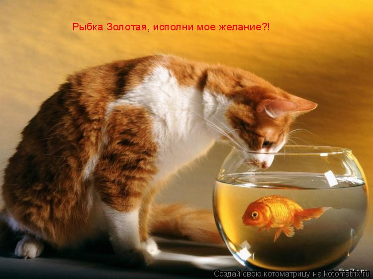 Котоматрица: Рыбка Золотая, исполни мое желание?!