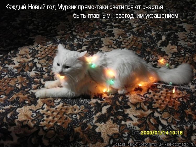 Котоматрица: Каждый Новый год Мурзик прямо-таки светился от счастья быть главным новогодним украшением.