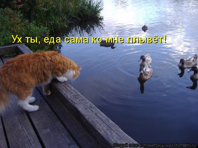 Котоматрица: Ух ты, еда сама ко мне плывёт!
