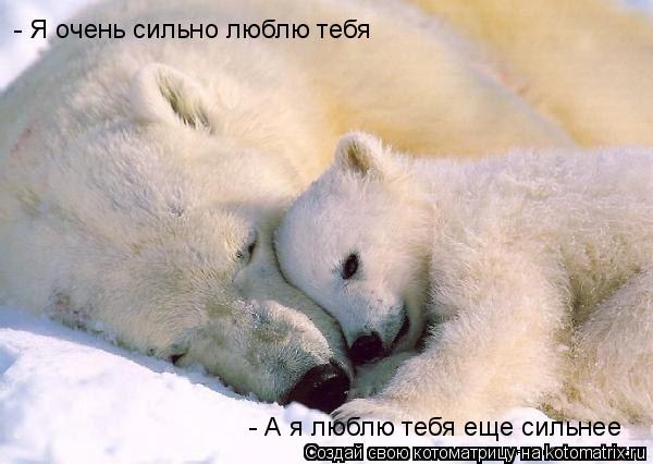 Котоматрица: - Я очень сильно люблю тебя - А я люблю тебя еще сильнее