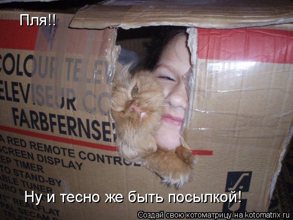 Котоматрица: Пля!! Ну и тесно же быть посылкой!