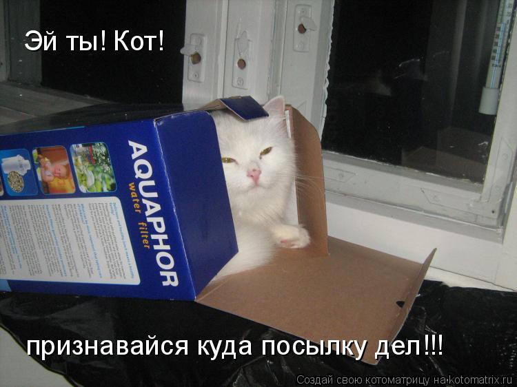 Котоматрица: Эй ты! Кот! признавайся куда посылку дел!!!