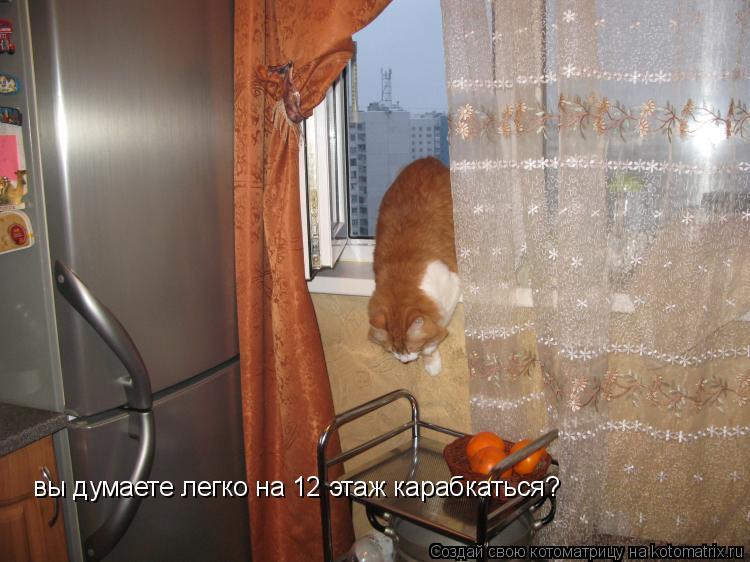 Котоматрица: вы думаете легко на 12 этаж карабкаться?