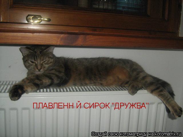 """Котоматрица: ПЛАВЛЕННІЙ СИРОК """"ДРУЖБА"""""""