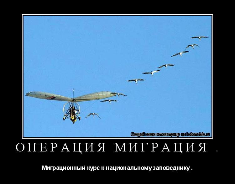 Котоматрица: Операция миграция . Миграционный курс к национальному заповеднику .