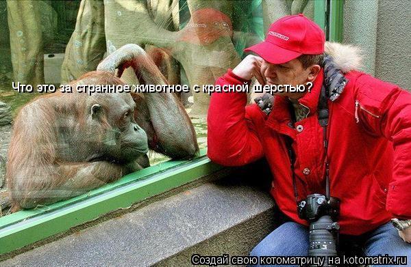 Котоматрица: Что это за странное животное с красной шерстью?