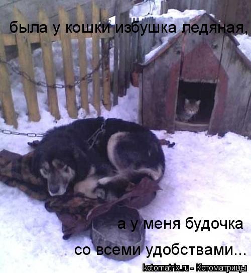 Котоматрица: была у кошки избушка ледяная, а у меня будочка  со всеми удобствами...